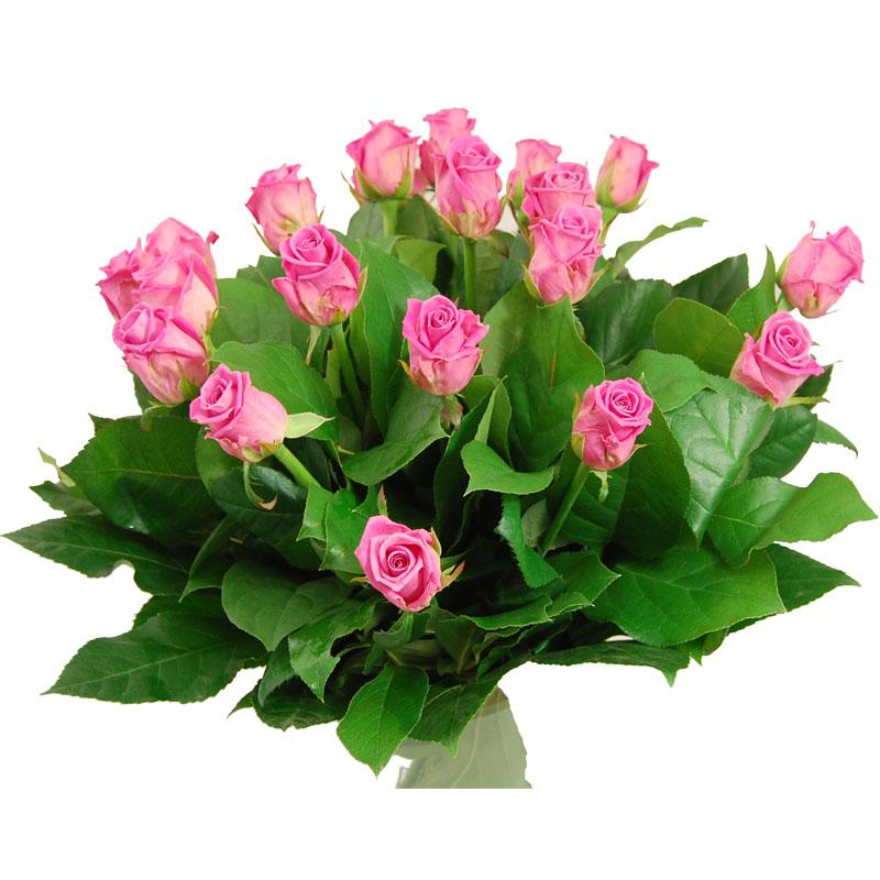 Middellange roze Rozen